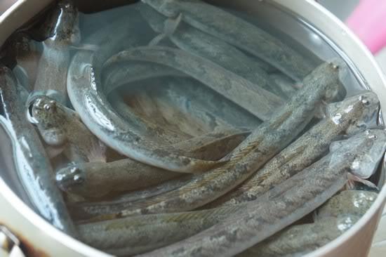 Cá Kéo tươi sống